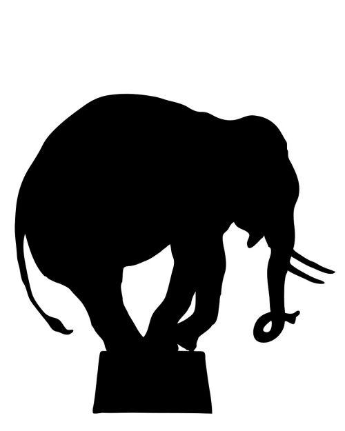 elephant circus elephant performing