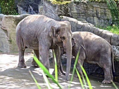 elephant young animals zoo