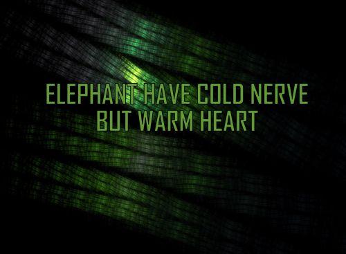 Elephant Entity