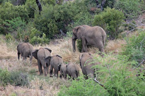 elephants exciting adventure