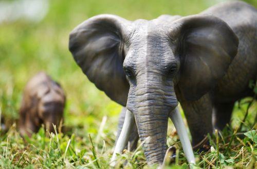 elephants toys grass