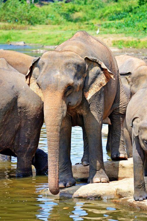 elephants bath sun bath