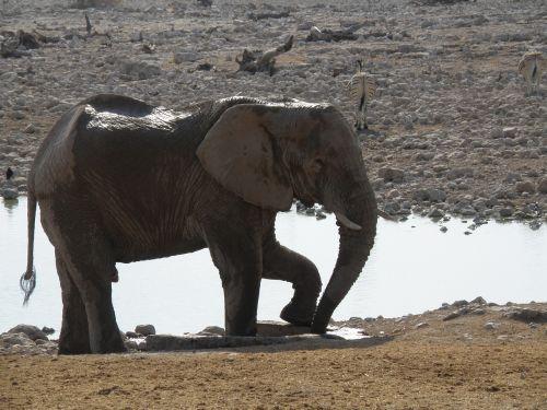 elephants namibia park