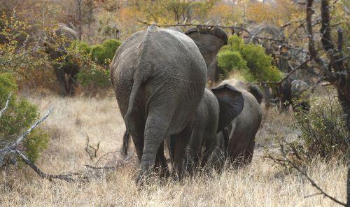 elephants herd wildlife