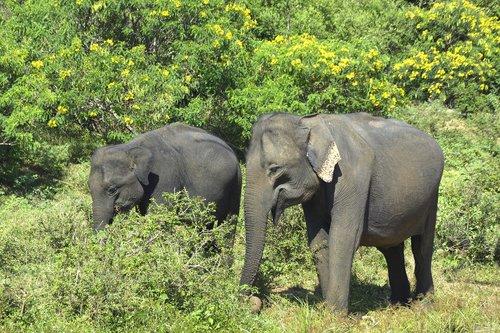 elephants  elephant  nature