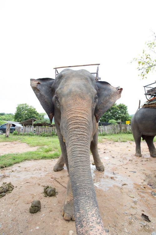 elephants positive thailand