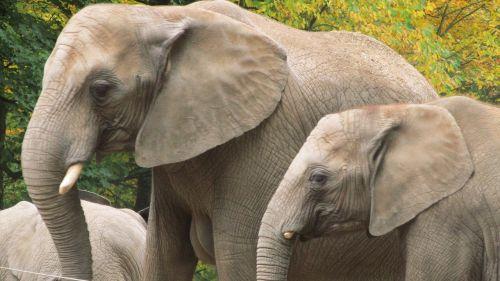 elephant wuppertal zoo