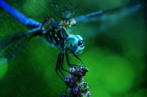 elf,fee,fantasy,woman,figure,fairytale,wing,mystical,dragonfly,insect,romantic,mythical creatures,pose,nature,miniature,pretty,fly,blue,green,composing,digital art,creative