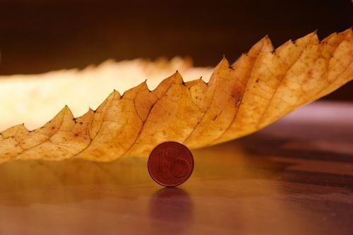 elm leaf mountain elm macro