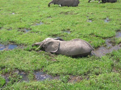 elphant kenya bath