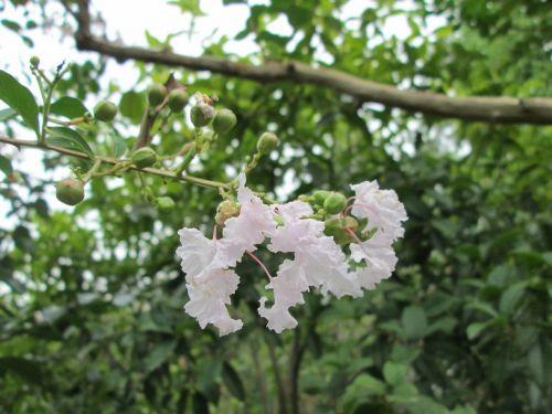 embankment angle park flower