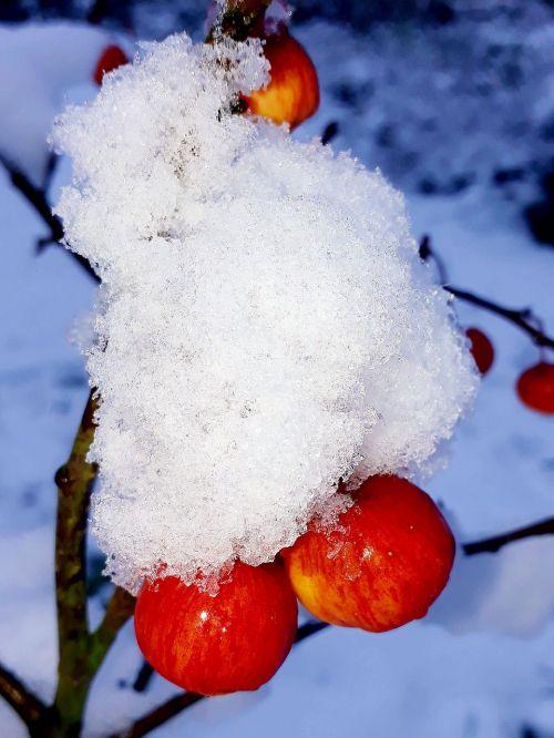 embellishment snow snow crystals