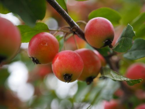 embellishment apple small