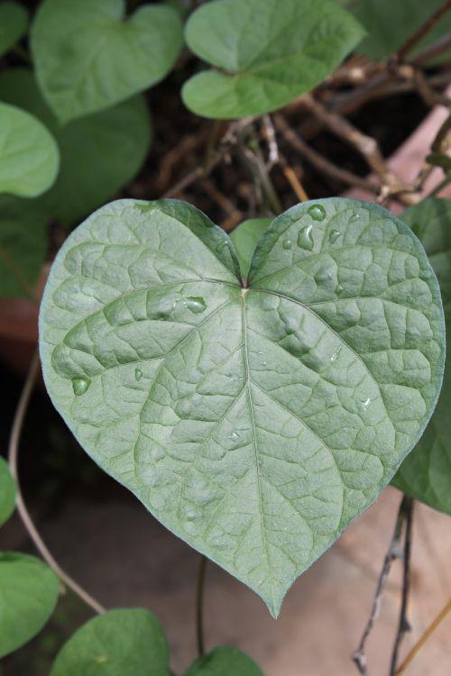 emotion love heart