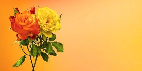 emotions  flower  plant