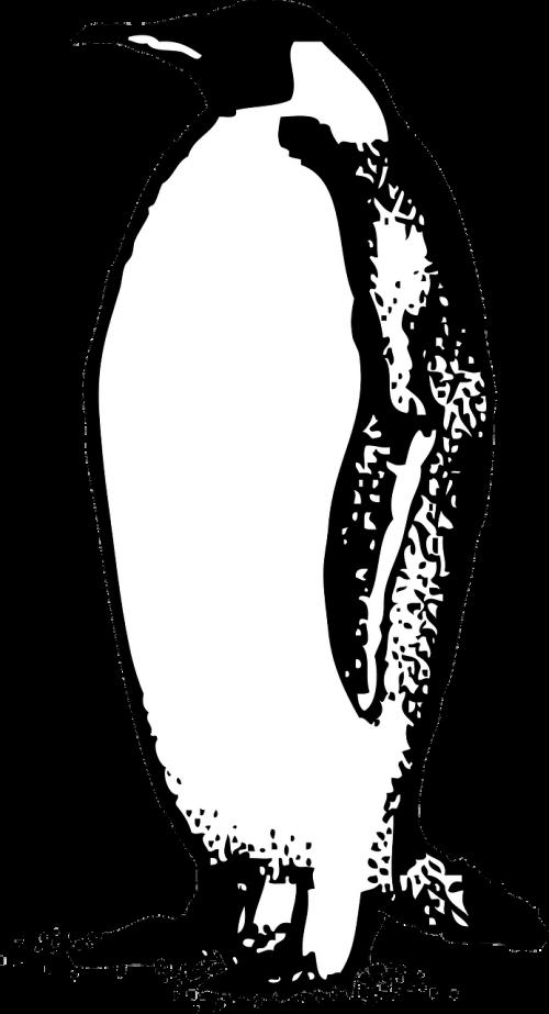 emperor penguin bird