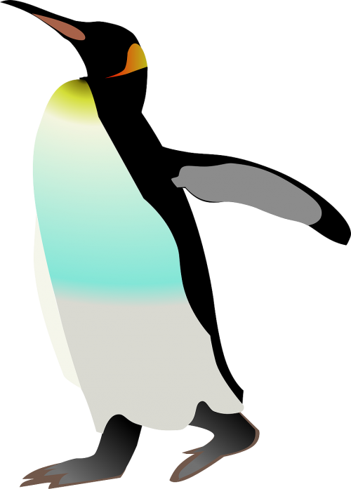 emperor penguin penguin bird