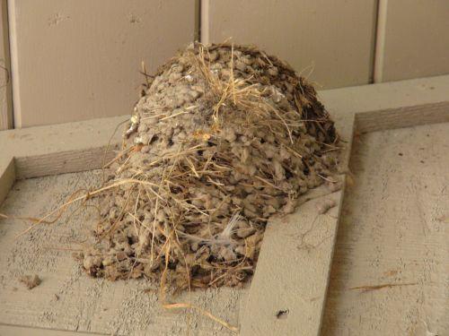 Empty Swallow Nest 2
