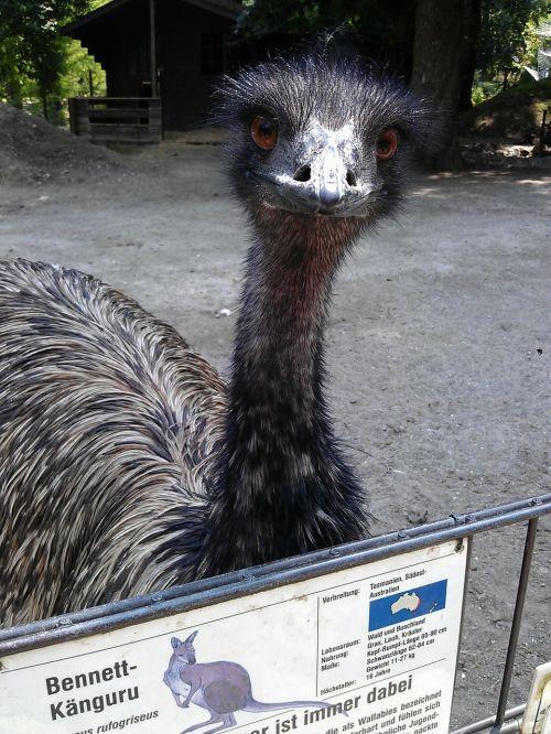 emu animal park ulm wild animal