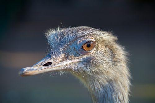 emu zoo animal