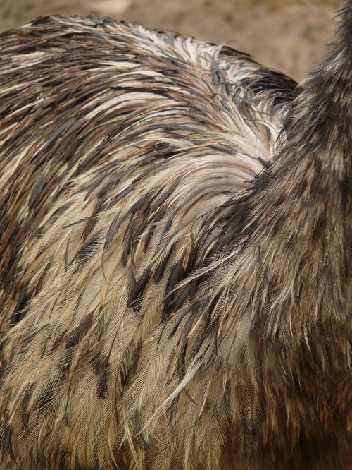 emu plumage bird