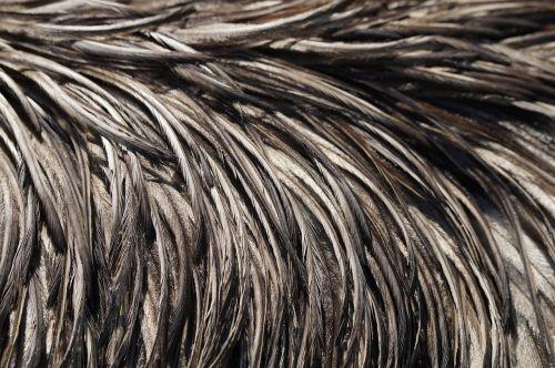emu feathers emu feather