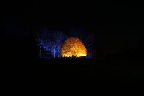 enchanted woodland mystery