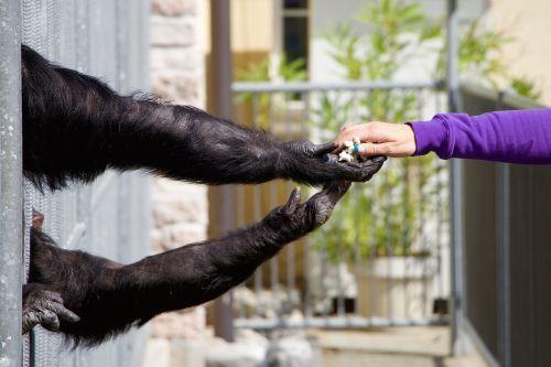 encounter animal human