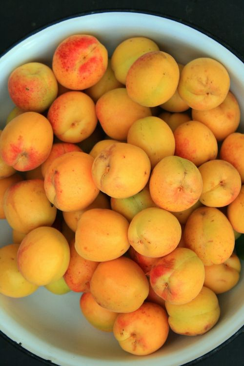 Enemal Basin With Apricots