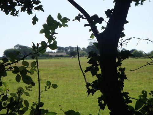 english meadow english garden