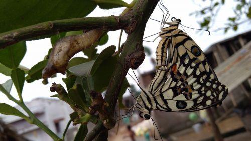 mėgautis drugeliais,tikrai gražu,c,hffghhhgd,ghjjkjhfgjk