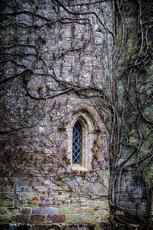 entwine  castle  gloomy
