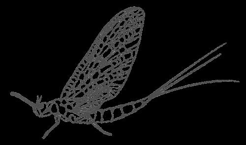 ephemera insect blades