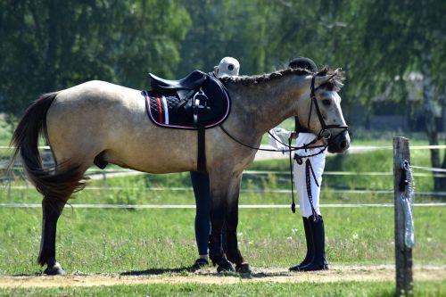 equestrian horse riding