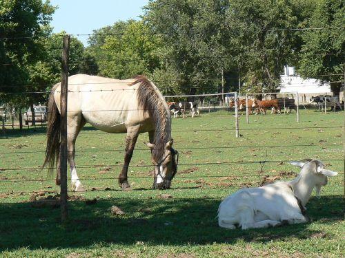 equine animals horse