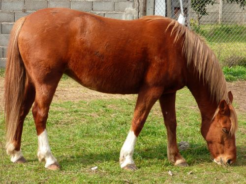 equine horse eating