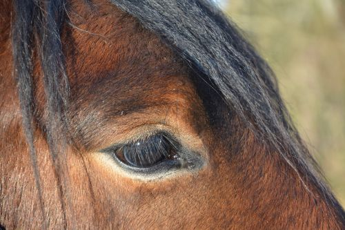 equine horse brown