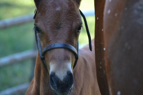 equine horse foal
