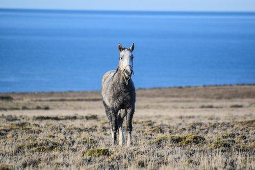 equine  wild  nature