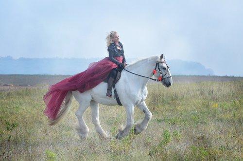 equine  horse  gray