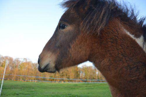 equines pony animal