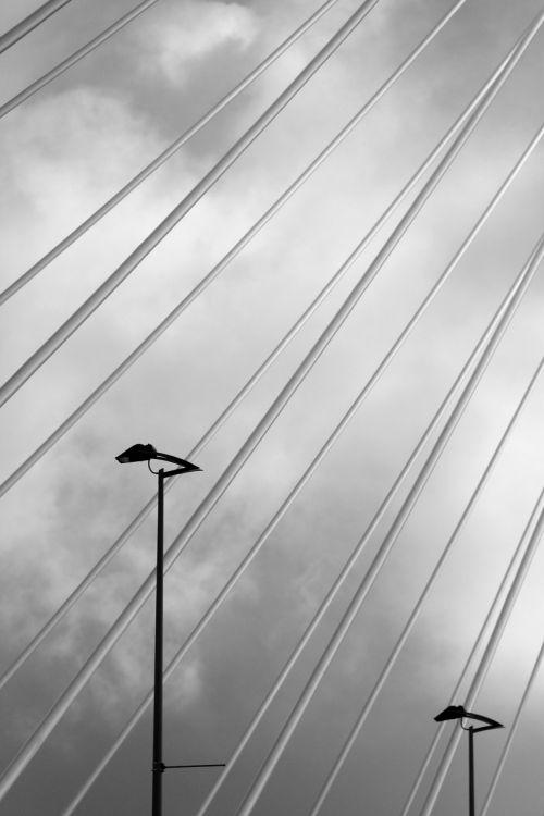 erasmus bridge rotterdam swan