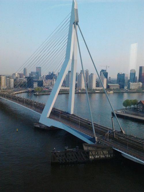 erasmus bridge cable stayed bridge most beautiful bridge of rotterdam