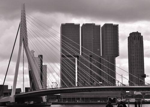 erasmus bridge rotterdam bridge