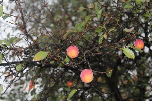 erik fruit rain