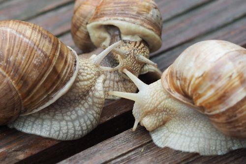 escargots snail shell