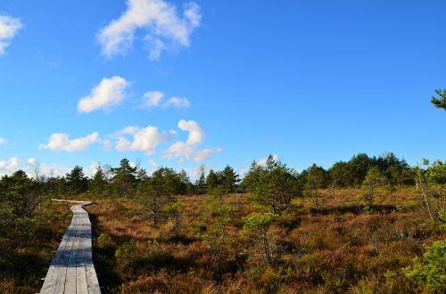 estonia forest landscape