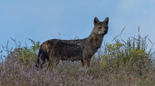ethiopia africa animal