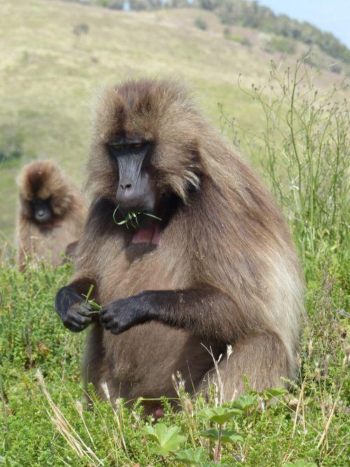 ethiopia africa national park