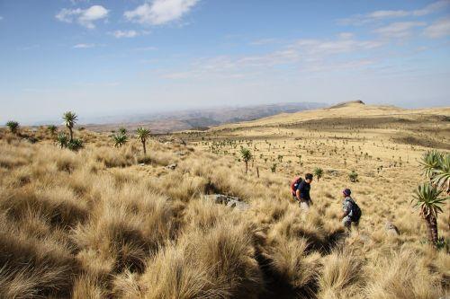 ethiopia simian trekking